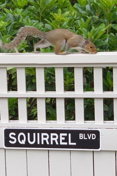 The backyard squirrels.